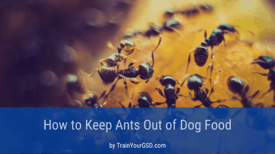 how to keep ants out dog food
