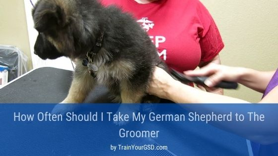 How Often Should I Take My German Shepherd to The Groomer