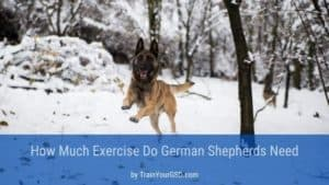 how much exercise do german shepherds need
