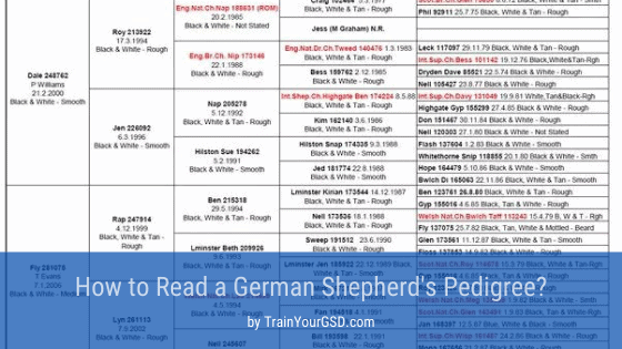 how to read a german shepherd's pedigree