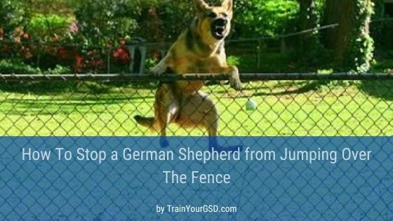 stop german shepherds jumping the fence