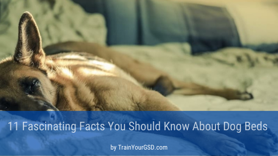 facts you should know about dog beds