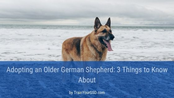 adopting an older German Shepherd