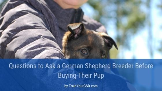 questions to ask a german shepherd breeder