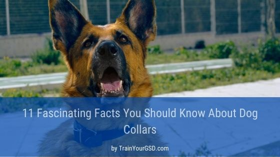 facts about dog collars
