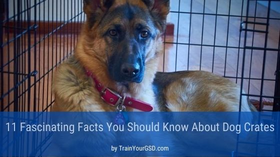 11 Fascinating Facts You Should Know About Dog Crates