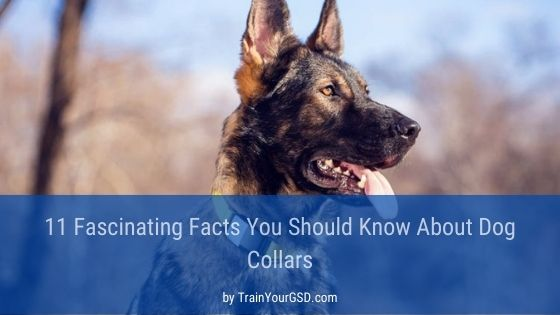 facts about shock collars