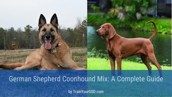 German shepherd and coonhound mix