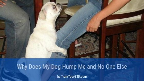 my dog hump me and no one else