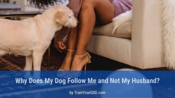 dog follows me and not my husband