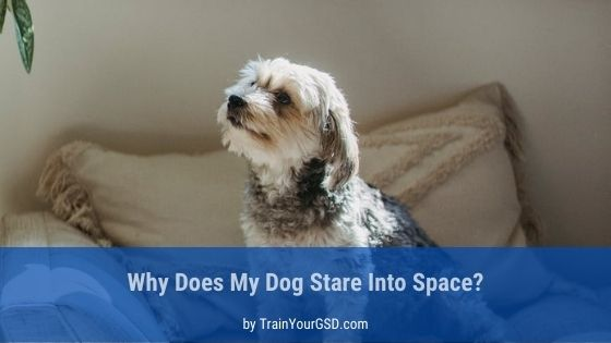 dog stares into space