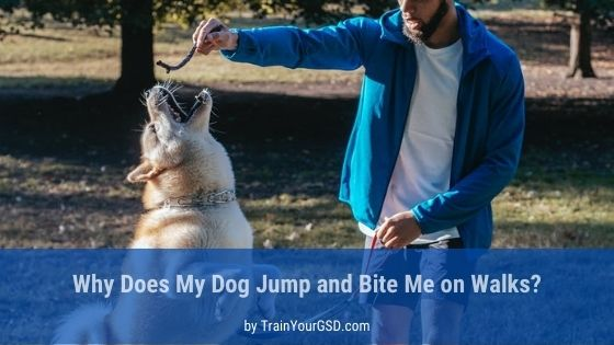 my dog jumps and bites me on walks