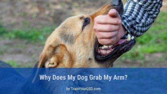 why does my dog grab my arm
