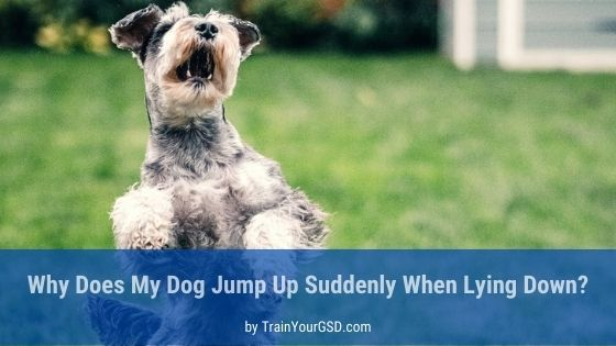 why does my dog jump up suddenly when lying down