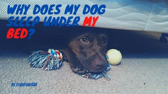 why does my dog sleep under my bed