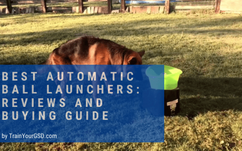 best automatic ball launchers: reviews and buying guide
