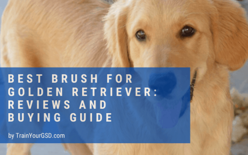 Top 5 Best Brushes For Golden Retriever