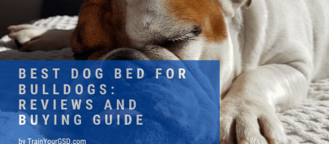 best dog bed for bulldogs