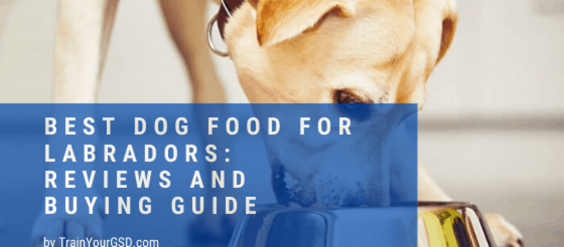 best dog food for labradors