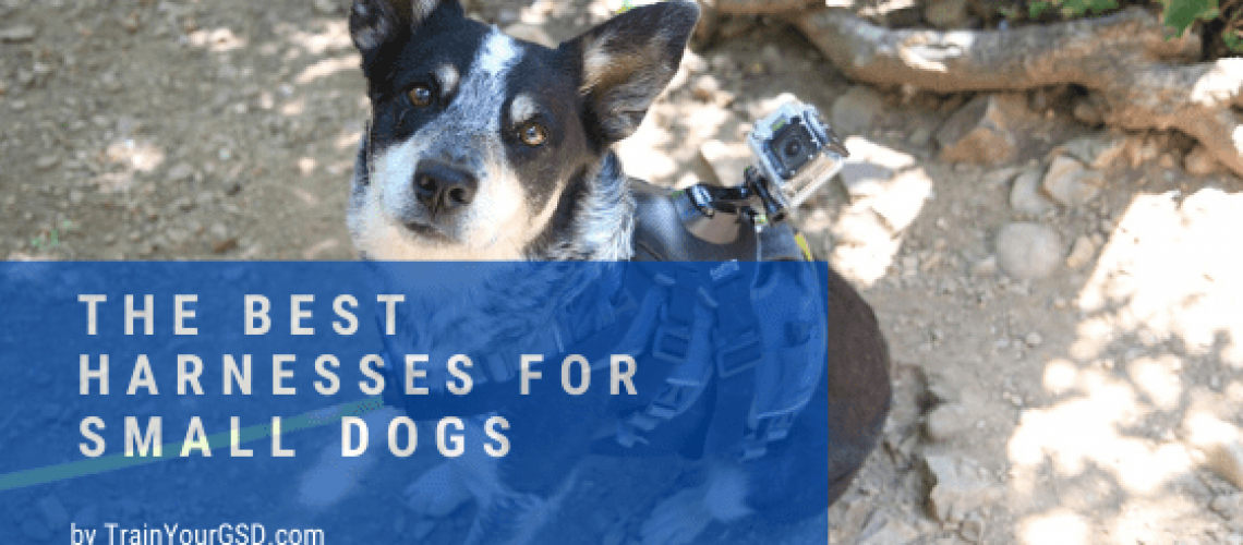 best harnesses for small dogs: reviews and buying guide