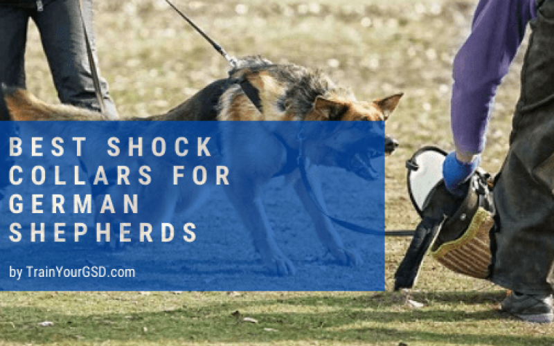 best shock collars for german shepherds