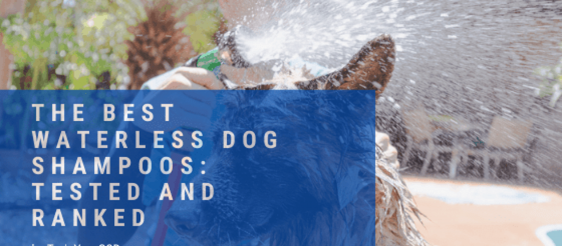 best waterless shampoos for dogs