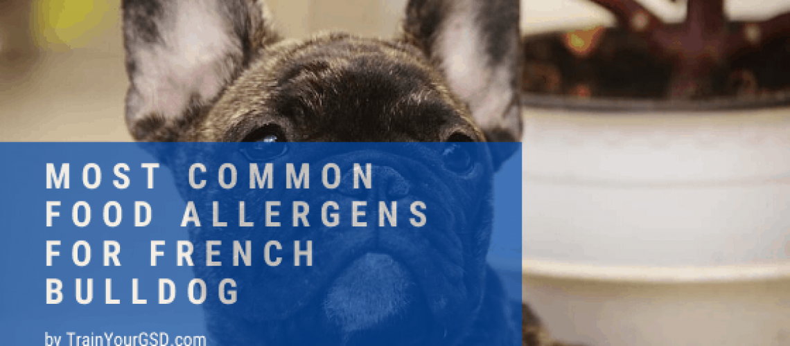 food allergens for french bulldog