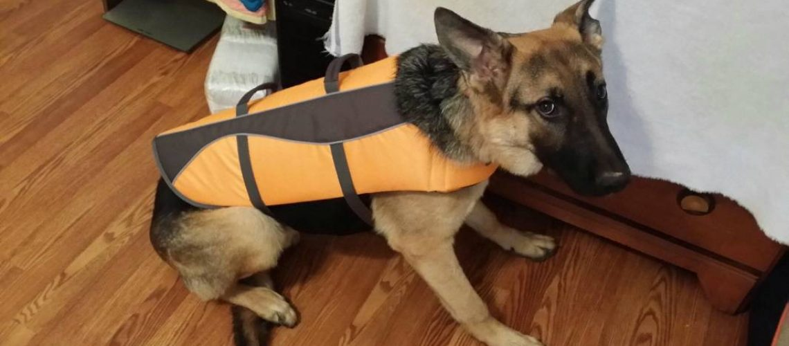 best dog life jackets for German shepherds