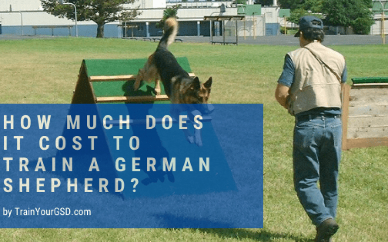 how much does it cost to train a german shepherd?