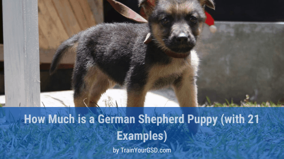 how much is a german shepherd puppy