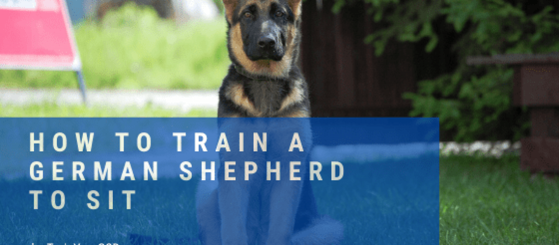 how to train a german shepherd to sit