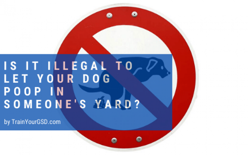 Is It Illegal to Let Your Dog Poop In Someone's Yard ...