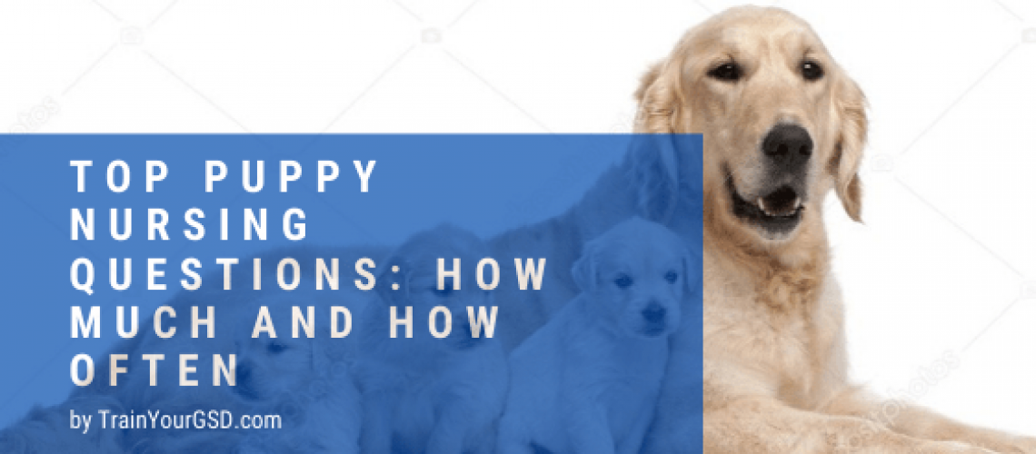 puppy nursing questions